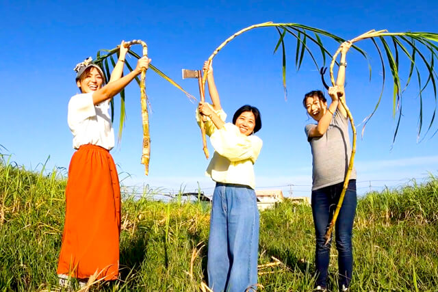 サトウキビの収穫体験