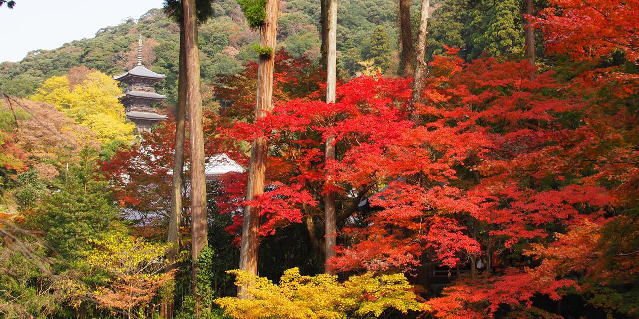 美しい山岳を背景に佇む歴史ある寺院を散策