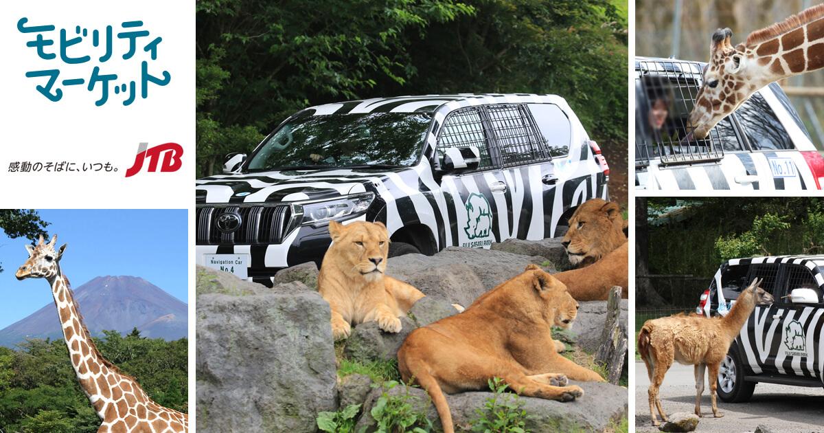 ゼブラ模様のクルマを運転して野生動物と遭遇!
